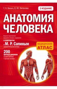Анатомия человека - Билич, Зигалова