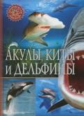 Акулы, киты и дельфины