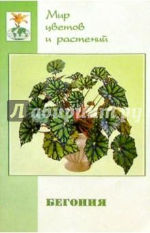 Бегония (Begonia). Семейство - бегониевые - Елена Жадько