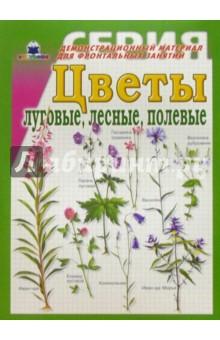 Название полевых цветков, фото, описание. Синие и желтые 47