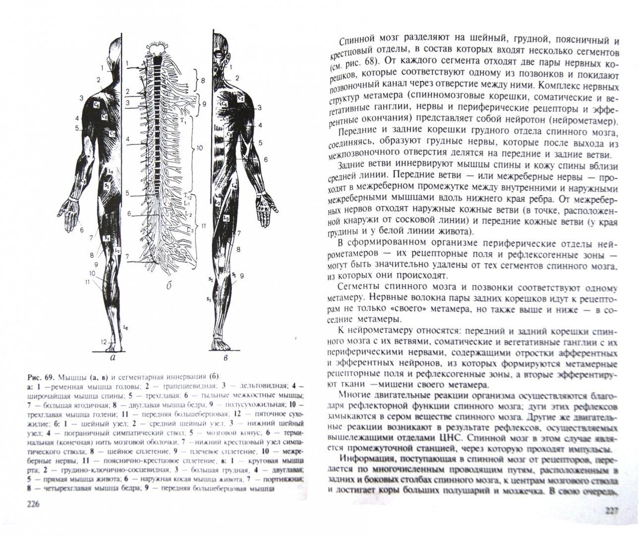 Иллюстрация 1 из 2 для Лечебный массаж - Дубровский, Дубровская   Лабиринт - книги. Источник: Лабиринт