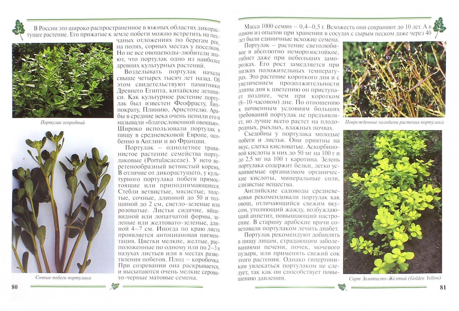 Иллюстрация 1 из 5 для Зеленные овощи. Пособие для садоводов-любителей - Гиренко, Зверева   Лабиринт - книги. Источник: Лабиринт