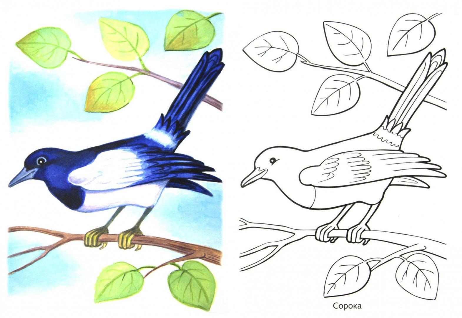 """Иллюстрация 1 из 16 для Раскраска """"Зимующие птицы""""   Лабиринт - книги. Источник: Лабиринт"""