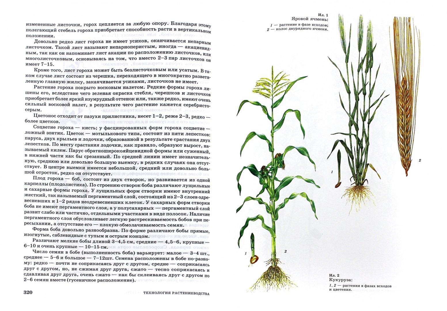 Иллюстрация 1 из 3 для Технология растениеводства. Учебное пособие - Наумкин, Ступин   Лабиринт - книги. Источник: Лабиринт