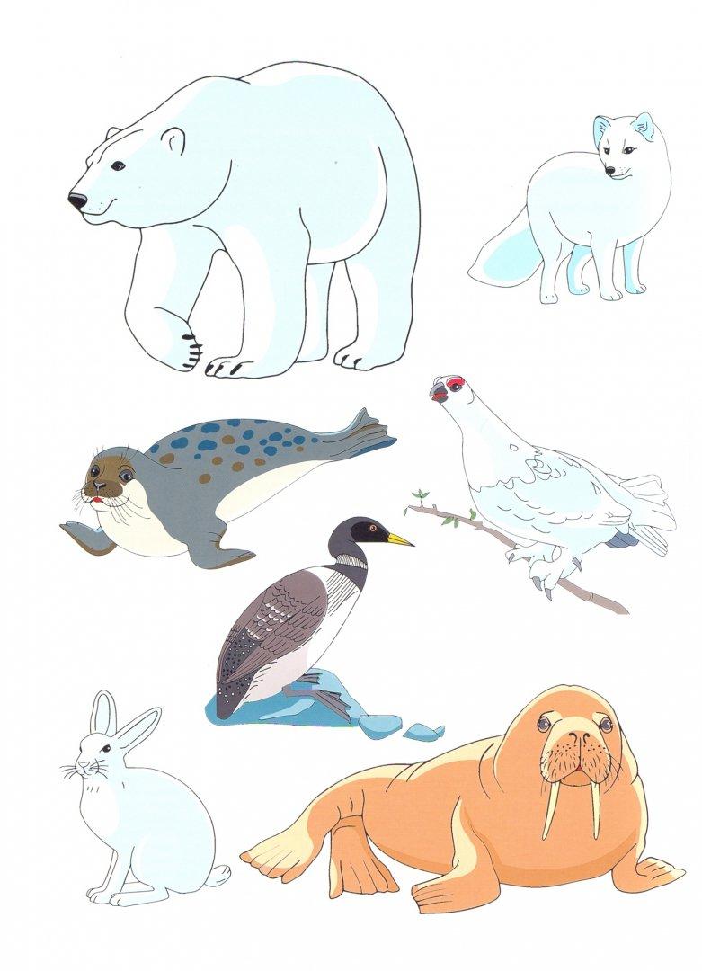Наглядное пособие животные севера в картинках