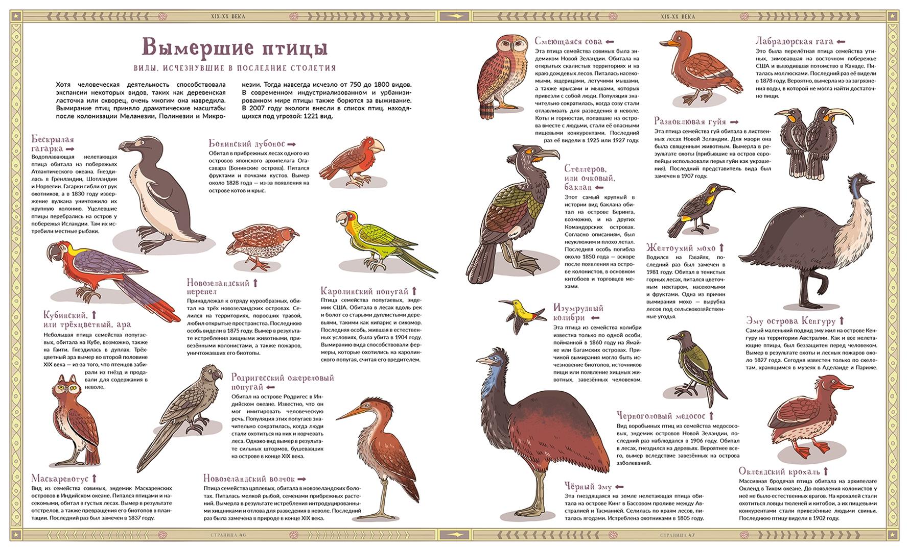 исчезнувшие животные и птицы в картинках ответил