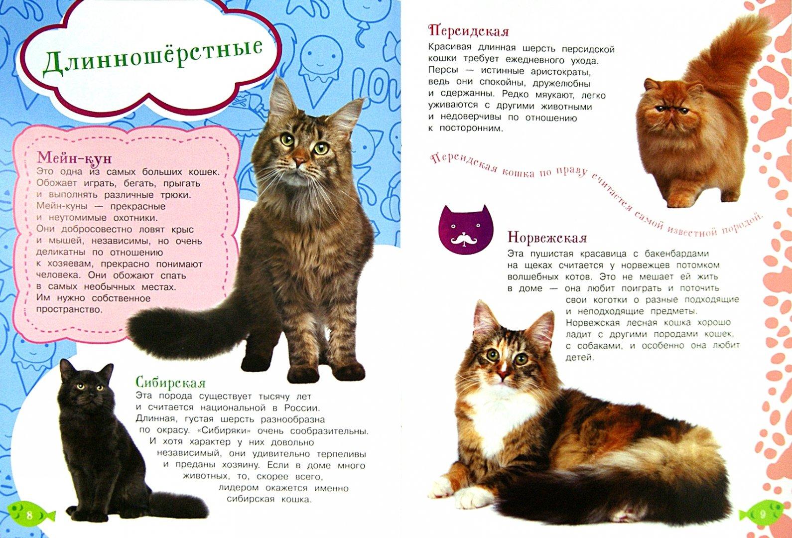 Иллюстрация 1 из 6 для Как воспитать котёнка   Лабиринт - книги. Источник: Лабиринт