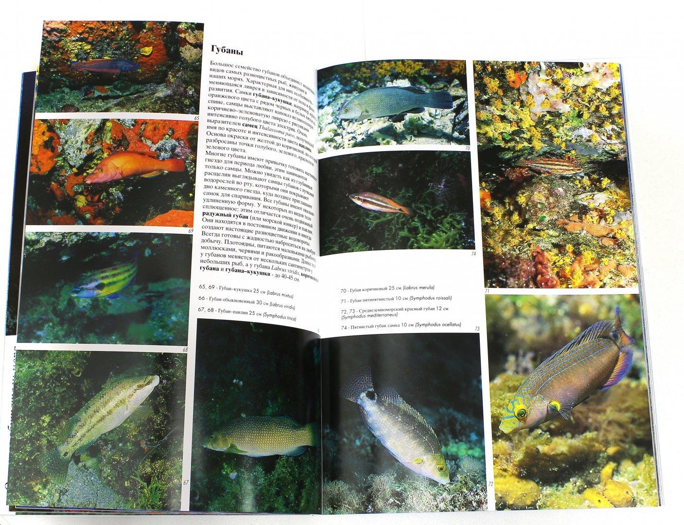 Иллюстрация 1 из 7 для Рыбы Средиземного моря - Андреа Гизотти   Лабиринт - книги. Источник: Лабиринт