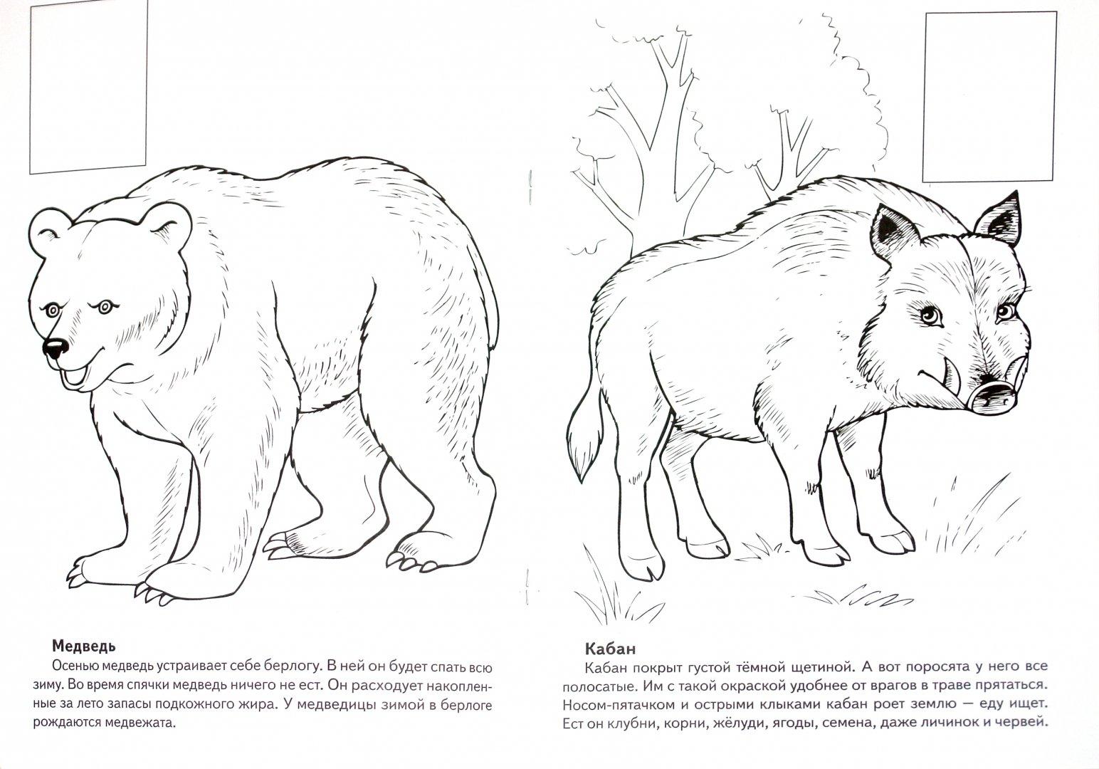 Рисунки животных которые занесены в красную книгу россии достопримечательности