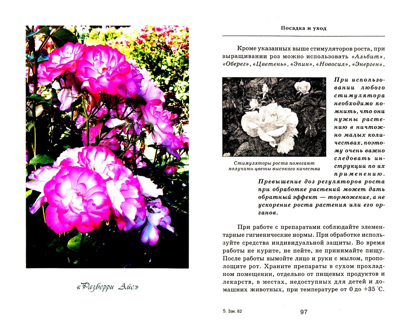 Иллюстрация 1 из 9 для Выращиваем шикарные розы - это непросто! - Любовь Мовсесян   Лабиринт - книги. Источник: Лабиринт