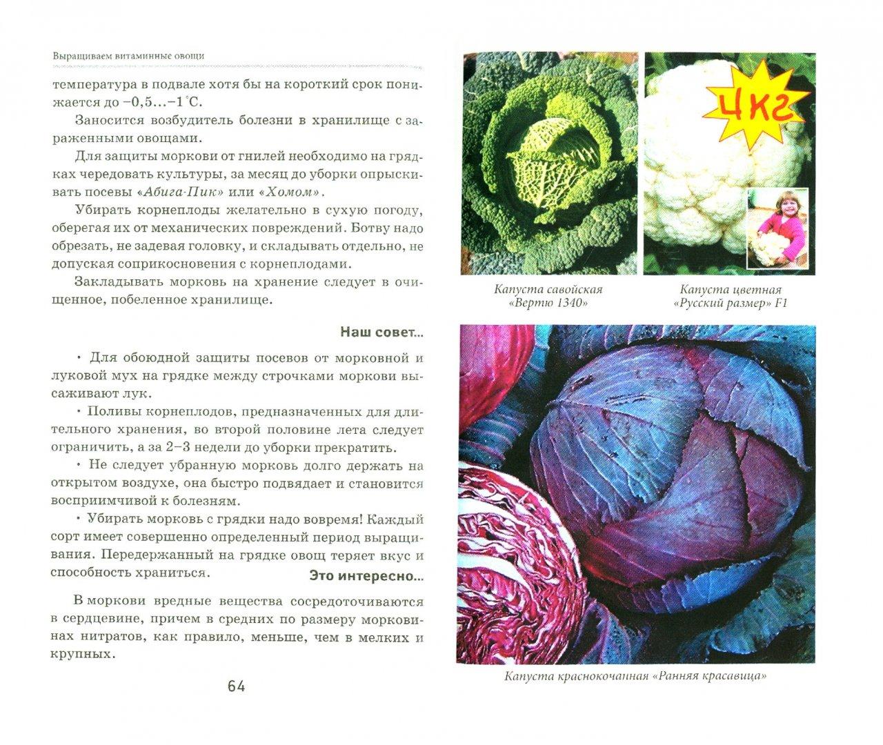 Иллюстрация 1 из 5 для Выращиваем витаминные овощи - Любовь Мовсесян | Лабиринт - книги. Источник: Лабиринт