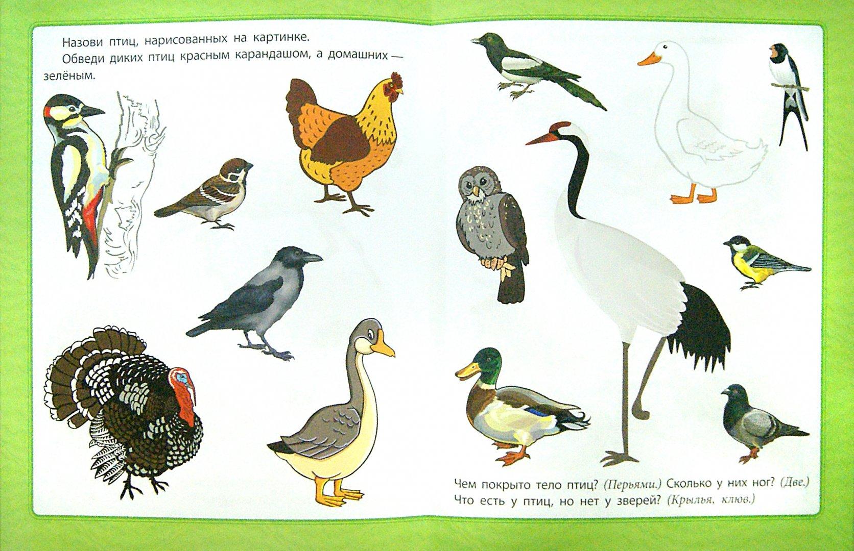 Иллюстрация 1 из 58 для Любознательным малышам. Окружающий мир - Евгения Ищук | Лабиринт - книги. Источник: Лабиринт
