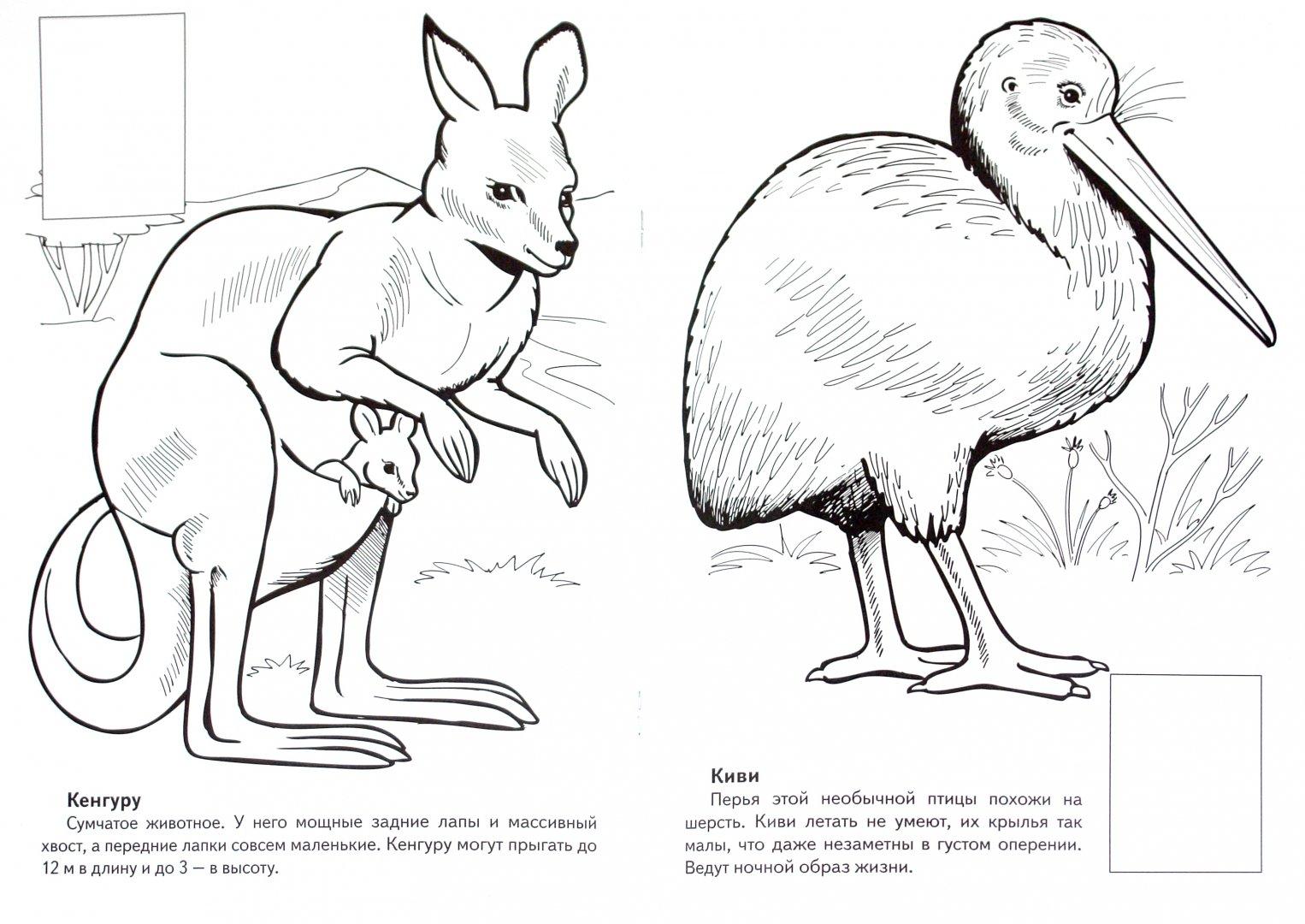 Рисунки животных которые занесены в красную книгу россии элегантный, является