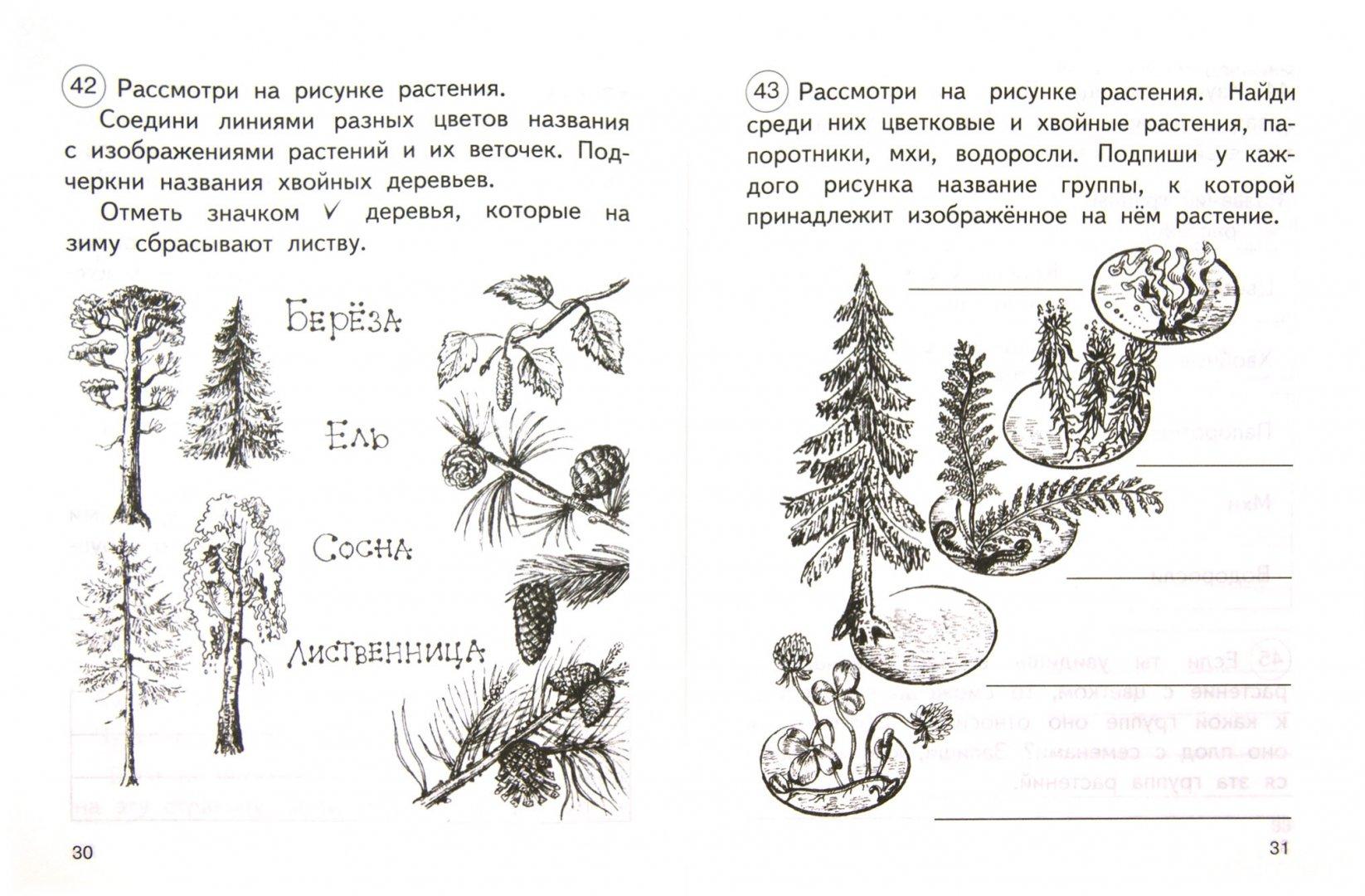 Иллюстрация 1 из 27 для Окружающий мир. 2 класс. Тетрадь для самостоятельной работы №1. ФГОС - Федотова, Трафимова, Трафимов   Лабиринт - книги. Источник: Лабиринт
