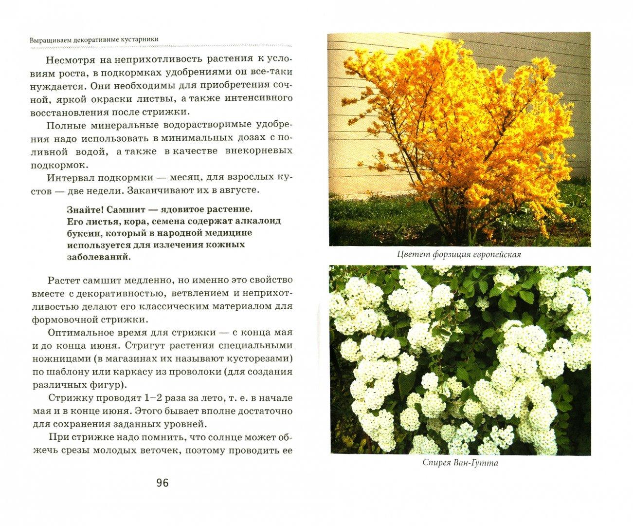 Иллюстрация 1 из 12 для Выращиваем декоративные кустарники - Любовь Мовсесян | Лабиринт - книги. Источник: Лабиринт