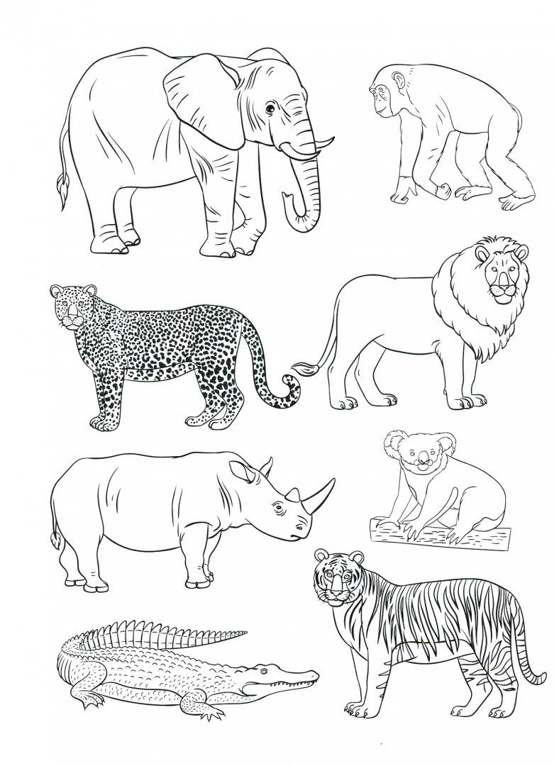 сюда тематические картинки животные жарких стран вариант последнее