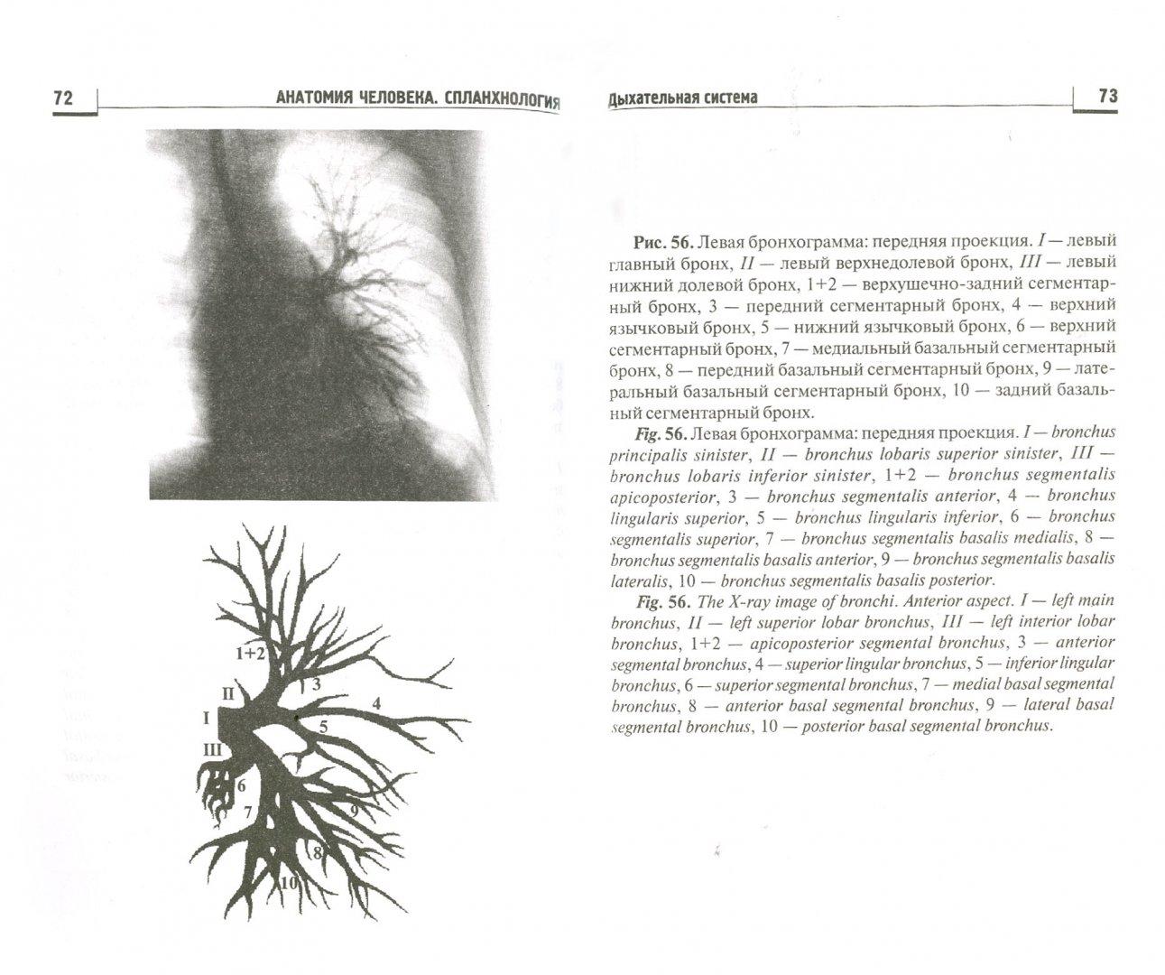 Иллюстрация 1 из 9 для Анатомия человека. Спланхнология: атлас-пособие - Каплунова, Швырев, Чаплыгина, Евтушенко | Лабиринт - книги. Источник: Лабиринт