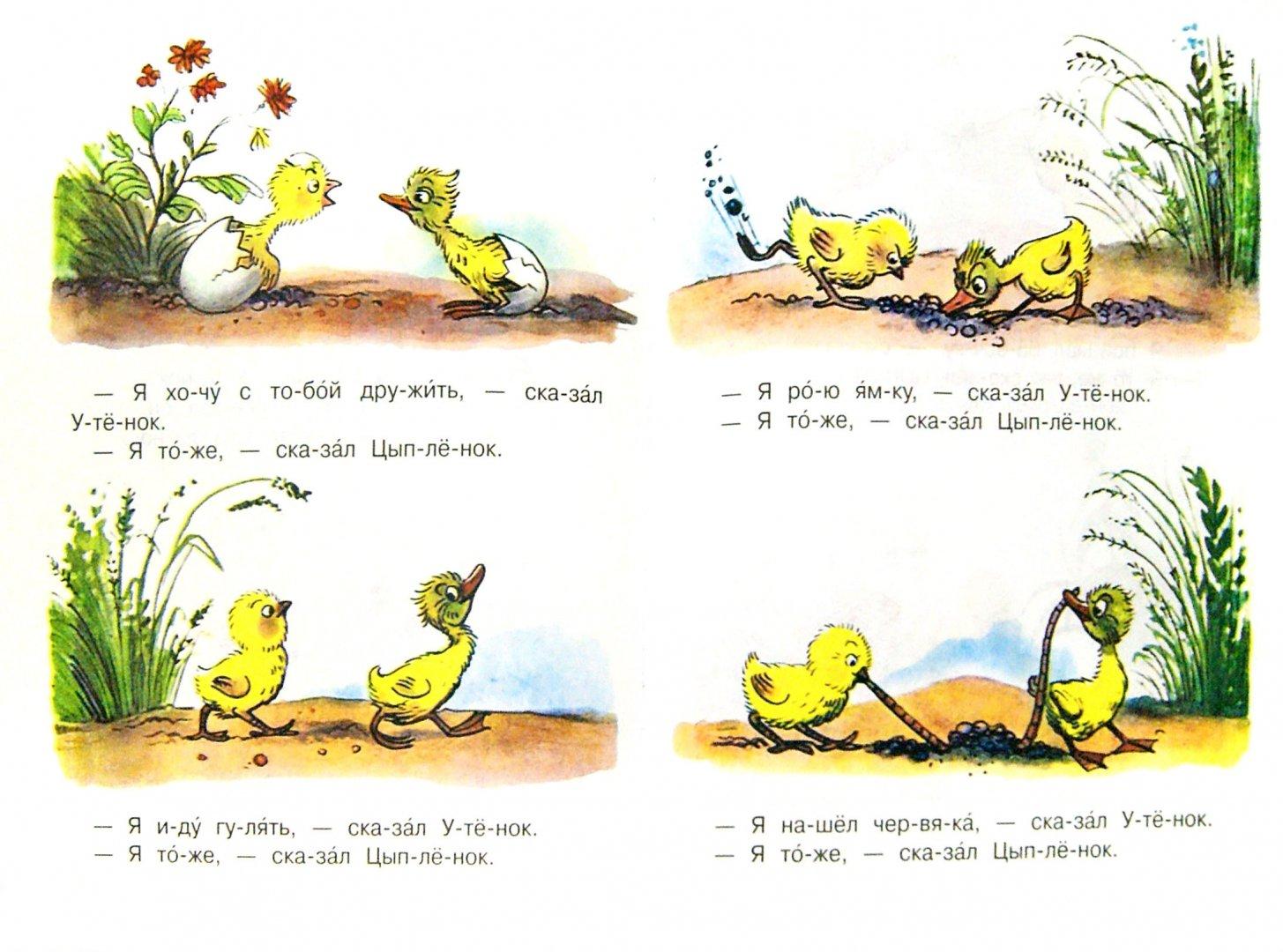 Иллюстрация 1 из 14 для Цыплёнок и Утёнок - Владимир Сутеев | Лабиринт - книги. Источник: Лабиринт