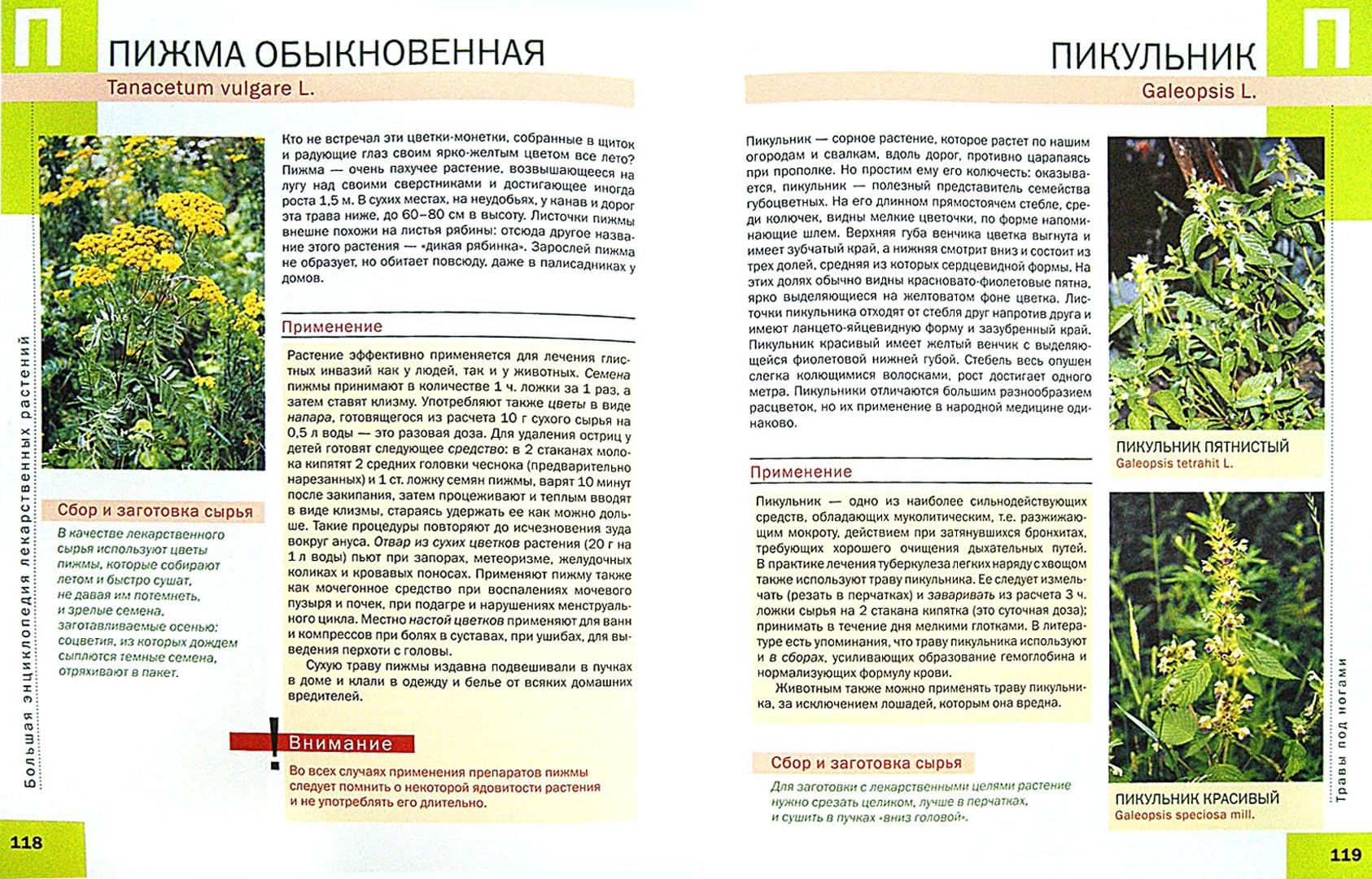 Лекарственные растения книга с картинками