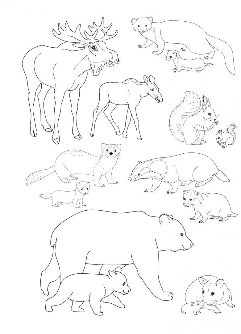 расскажем картинка животные севера распечатать срок посева