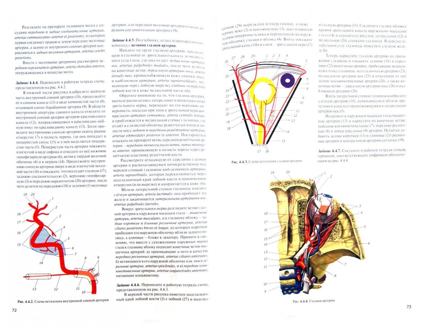 Иллюстрация 1 из 4 для Практикум по анатомии человека. В 4-х частях. Часть 3. Сердечно-сосудистая и лимфоидная системы - Цыбулькин, Горская, Колесников | Лабиринт - книги. Источник: Лабиринт