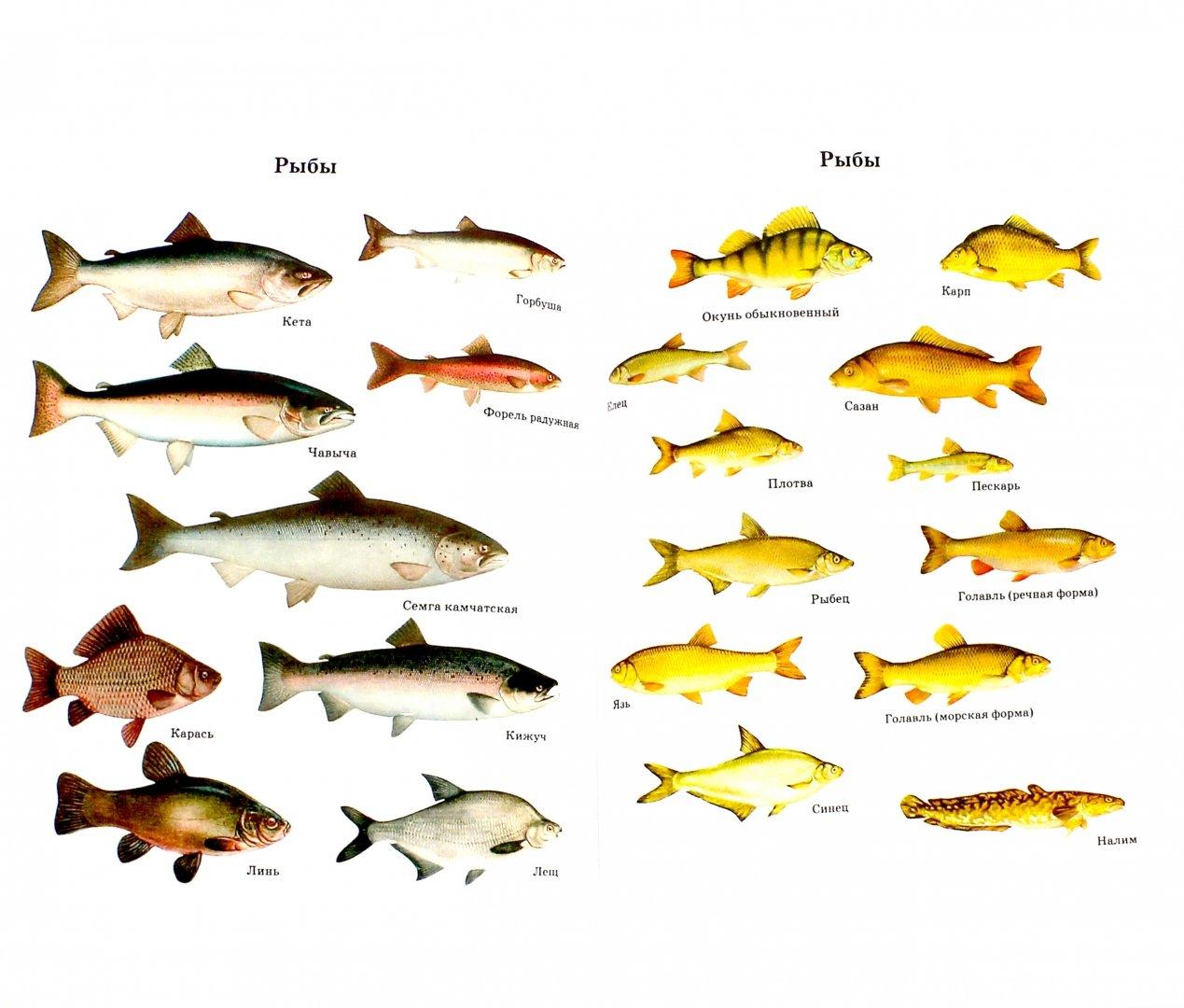 рыбы средней полосы россии картинки делили
