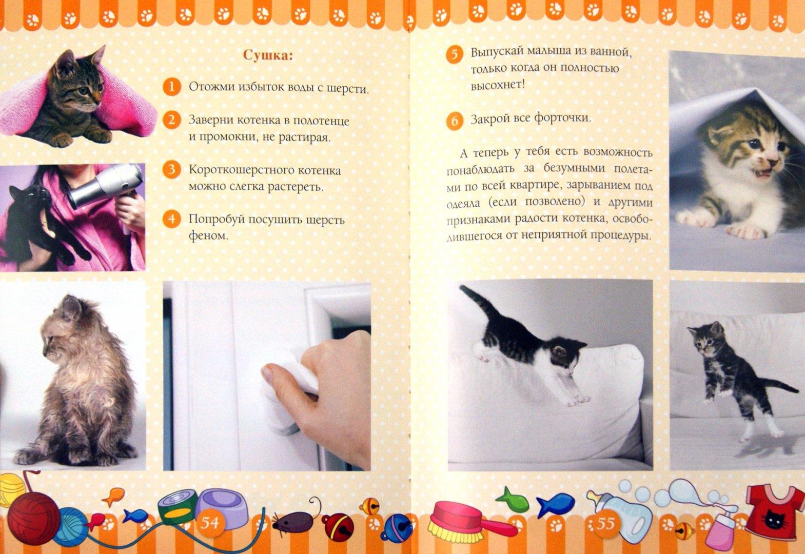 Иллюстрация 1 из 11 для Учусь ухаживать за котенком - Ксения Митителло | Лабиринт - книги. Источник: Лабиринт