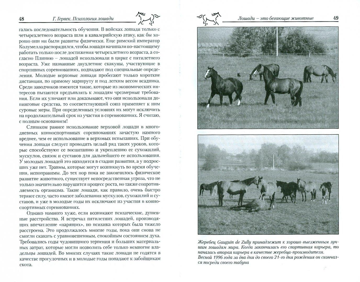 Иллюстрация 1 из 7 для Психология лошади. Нрав, чувства, поведение - Герхарт Герверк   Лабиринт - книги. Источник: Лабиринт