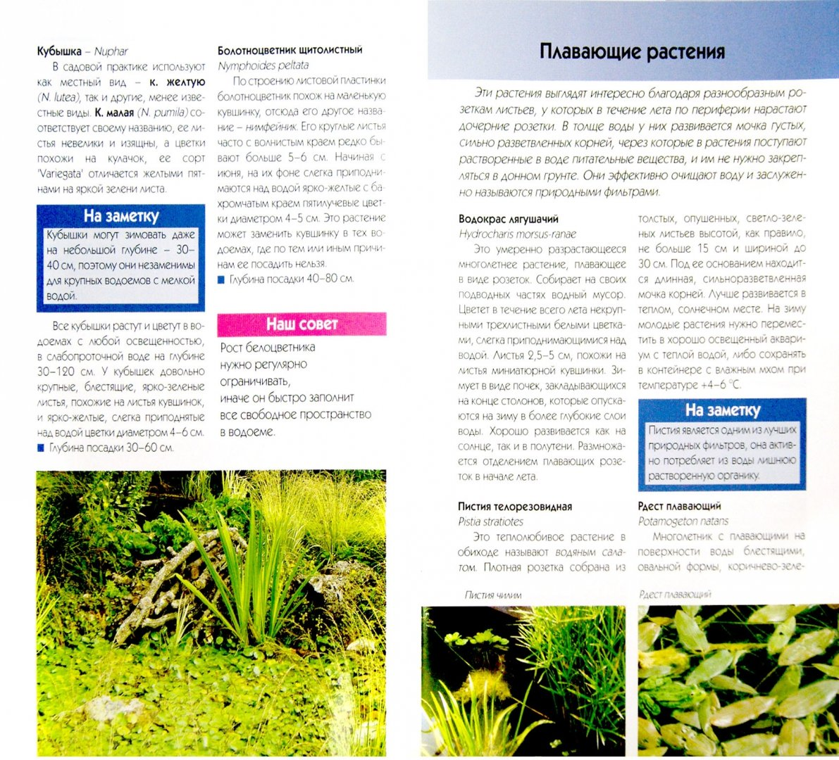 Иллюстрация 1 из 22 для Выбираем растения для декоративного водоема - Валерия Ильина   Лабиринт - книги. Источник: Лабиринт