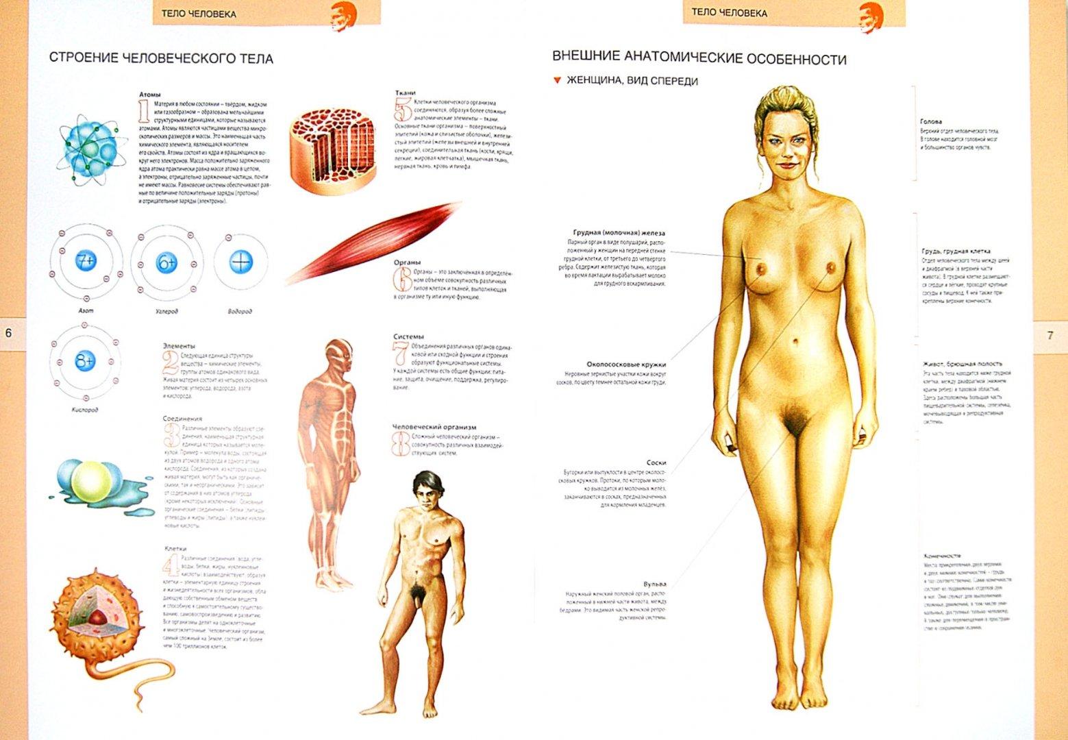 Иллюстрация 1 из 4 для Большой иллюстрированный атлас анатомии человека   Лабиринт - книги. Источник: Лабиринт