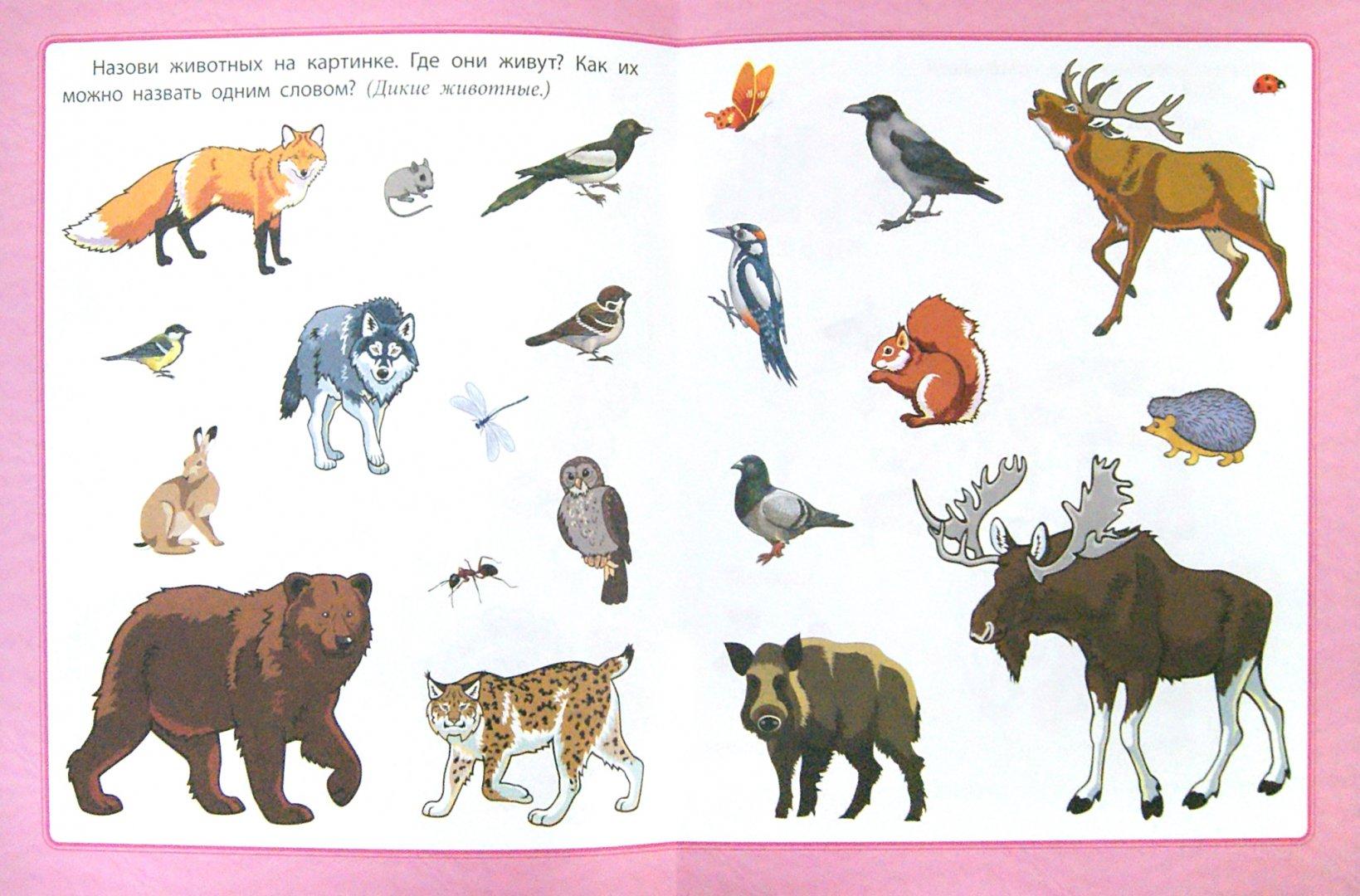 Иллюстрация 1 из 9 для Любознательным малышам. Развитие речи - Евгения Ищук | Лабиринт - книги. Источник: Лабиринт