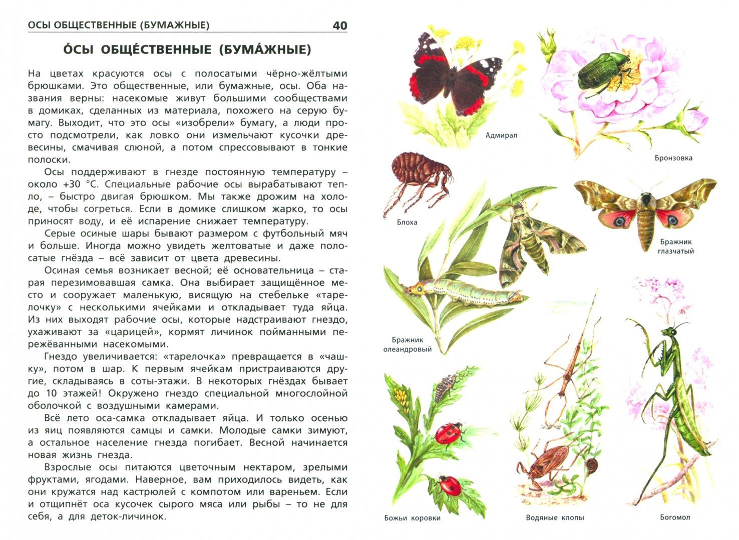 Иллюстрация 1 из 20 для Насекомые, пауки, многоножки. Начальная школа | Лабиринт - книги. Источник: Лабиринт