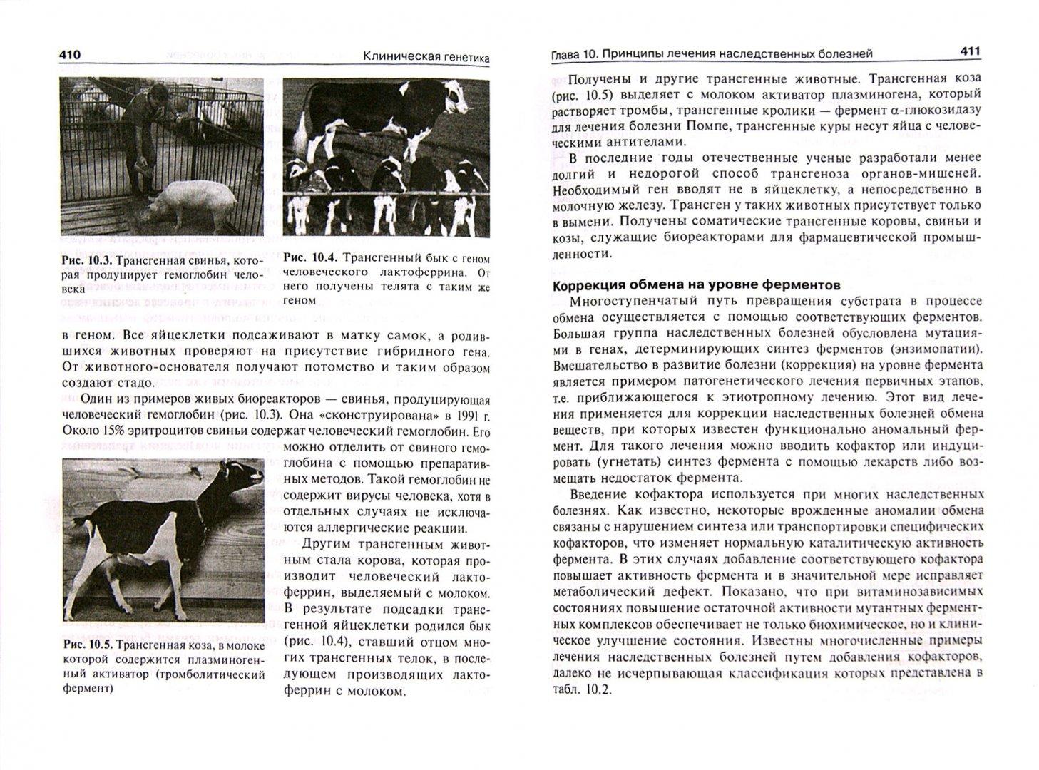 Иллюстрация 1 из 7 для Клиническая генетика. Учебник (+CD) - Бочков, Пузырев, Смирнихина   Лабиринт - книги. Источник: Лабиринт