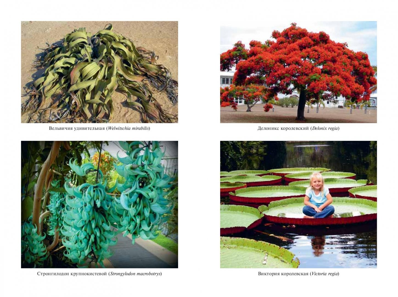 Иллюстрация 1 из 26 для Самые необычные растения - Оксана Ларина | Лабиринт - книги. Источник: Лабиринт