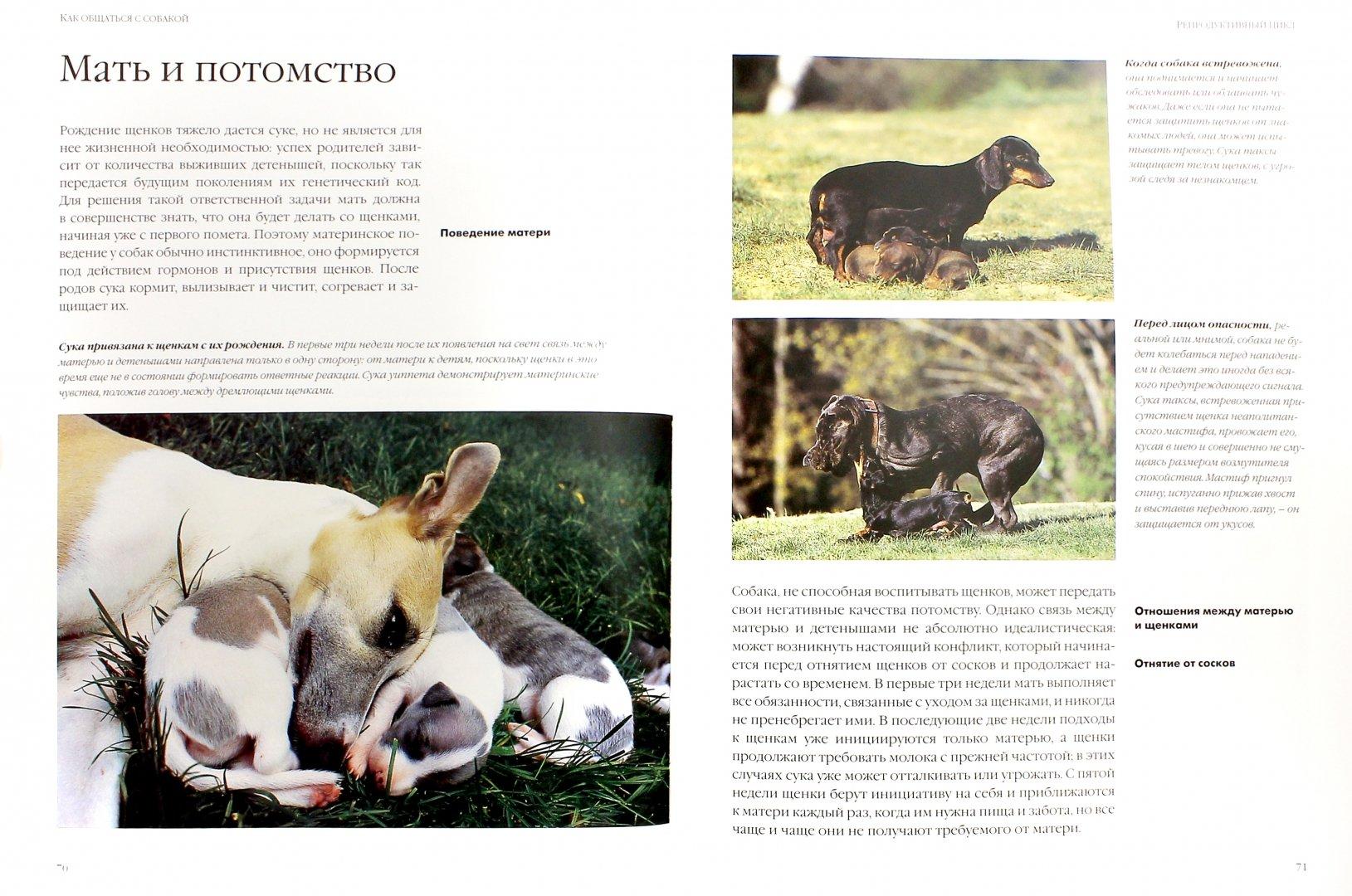 Иллюстрация 1 из 19 для Как общаться с собакой. Практическое руководство - Капра, Роботти | Лабиринт - книги. Источник: Лабиринт