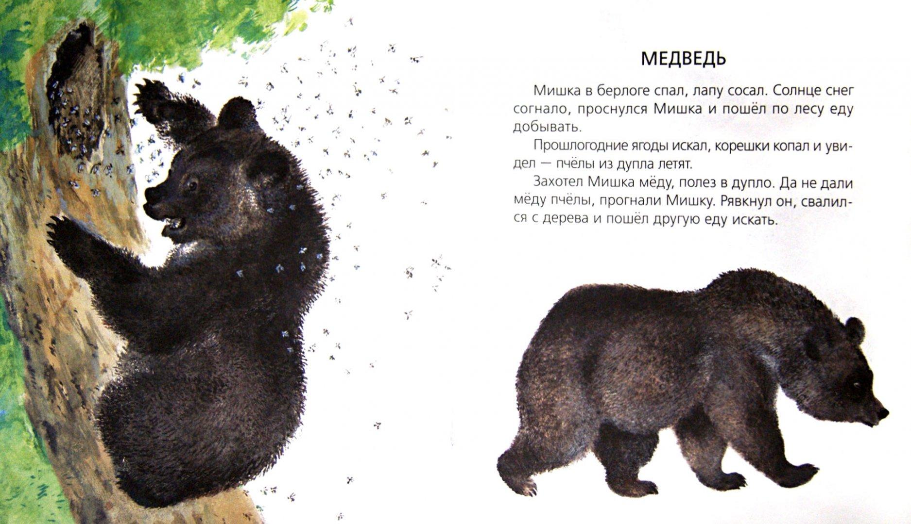 пришвин рассказ медведь с картинками