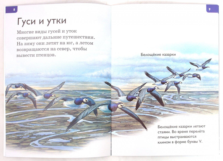 Иллюстрация 1 из 15 для Крылатые создания - Дениз Райан | Лабиринт - книги. Источник: Лабиринт