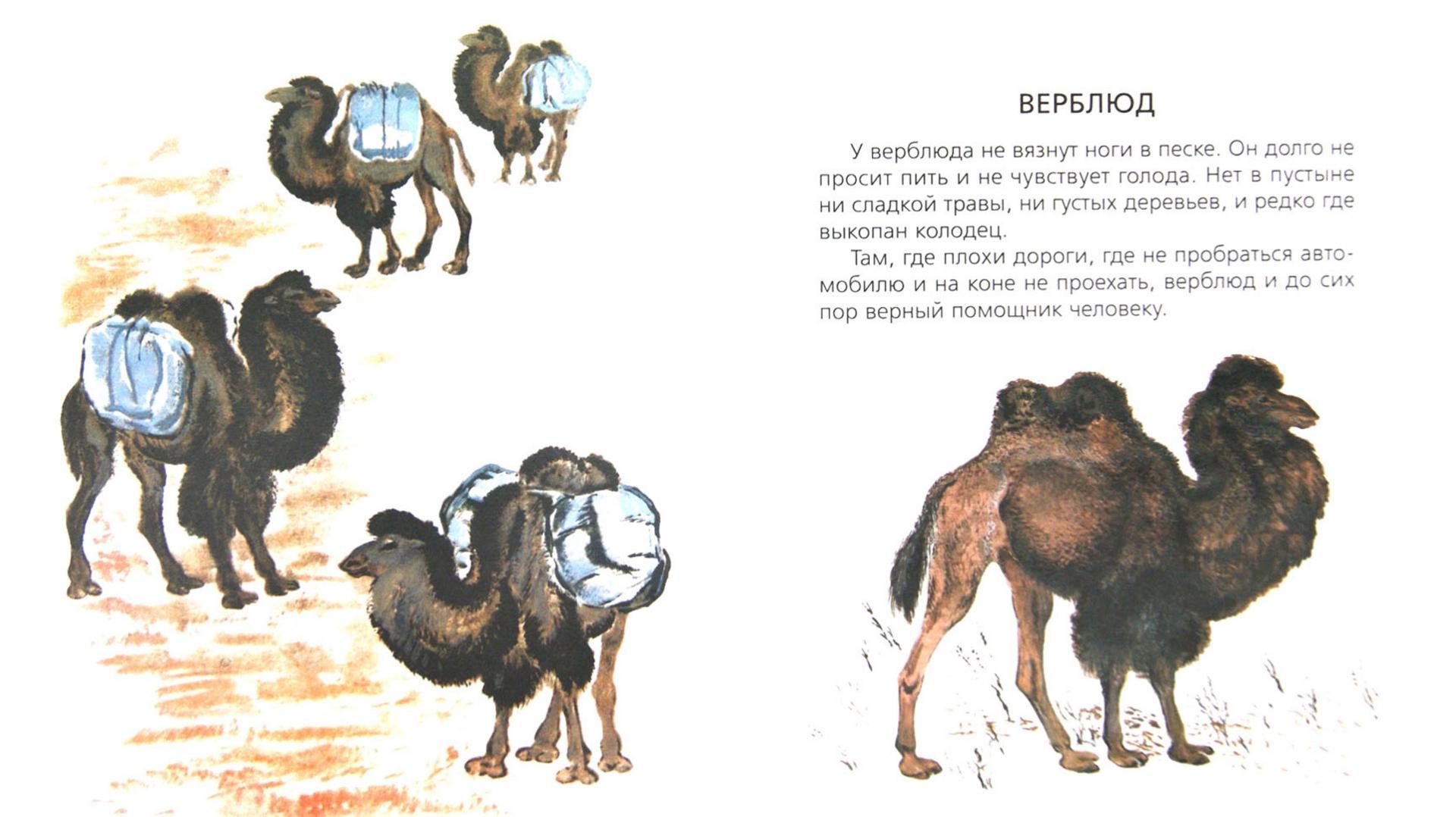 Иллюстрация 1 из 15 для Чарушинские зверята.  Комплект из 6 брошюр - Чарушин, Чарушина-Капустина | Лабиринт - книги. Источник: Лабиринт