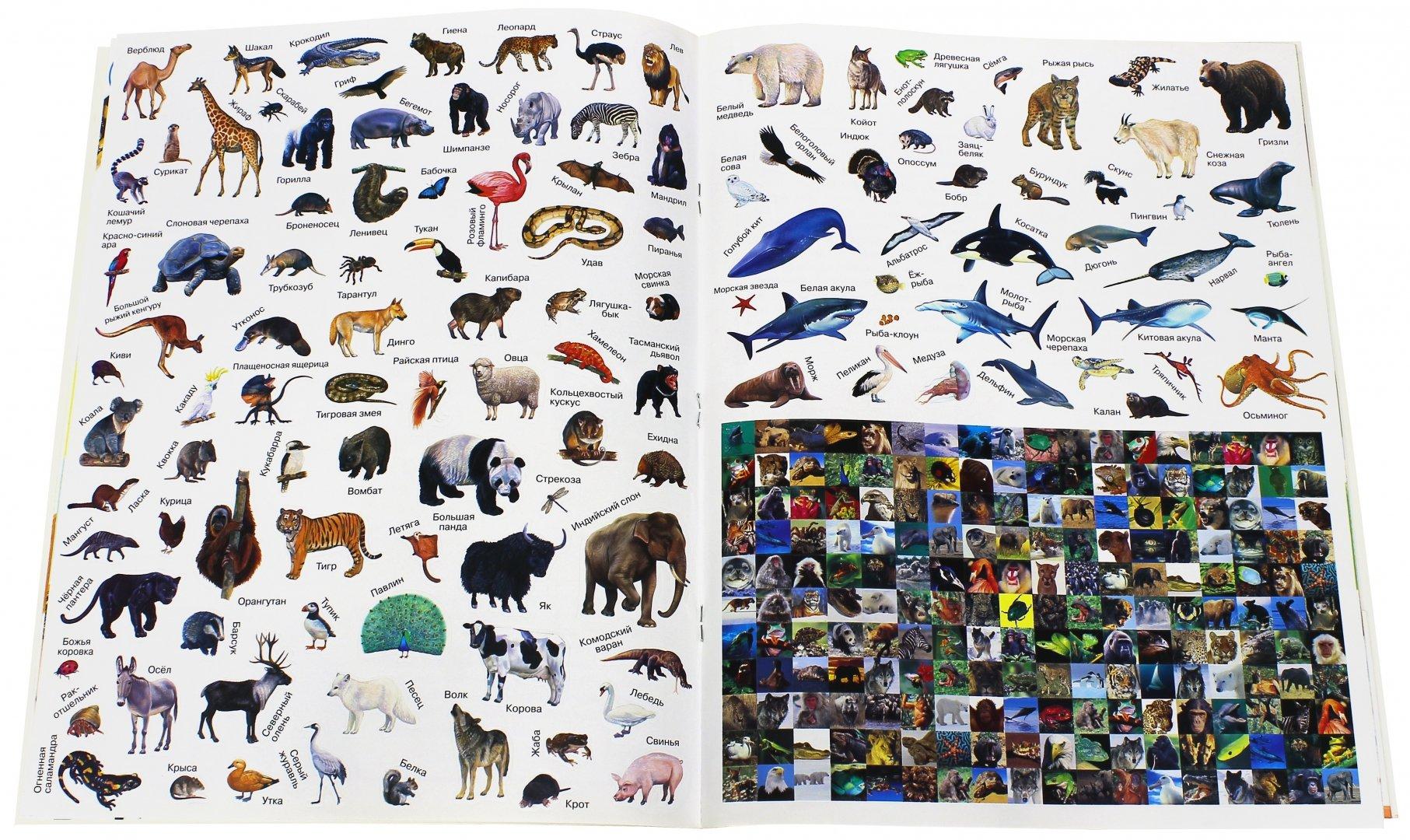 все животные мира список фото показаться