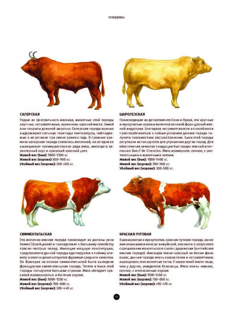Иллюстрация 6 из 24 для Мясо. Полное иллюстрированное руководство - Кен Ле | Лабиринт - книги. Источник: Лабиринт