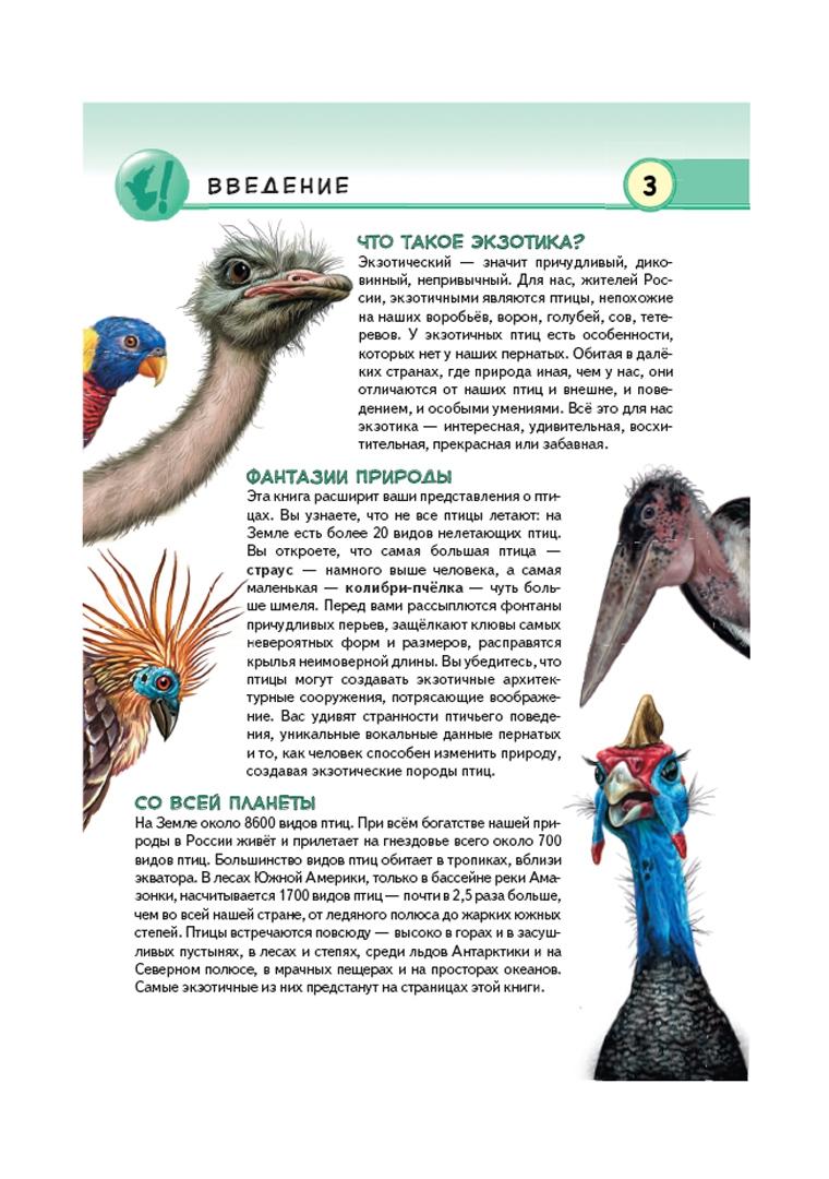Иллюстрация 1 из 46 для Экзотические птицы. Яркое царство пернатых - Юлия Школьник | Лабиринт - книги. Источник: Лабиринт