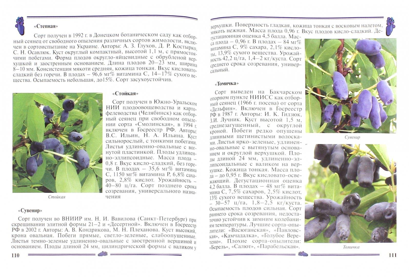 Иллюстрация 1 из 55 для Жимолость, ирга. Пособие для садоводов-любителей - Алла Куклина | Лабиринт - книги. Источник: Лабиринт