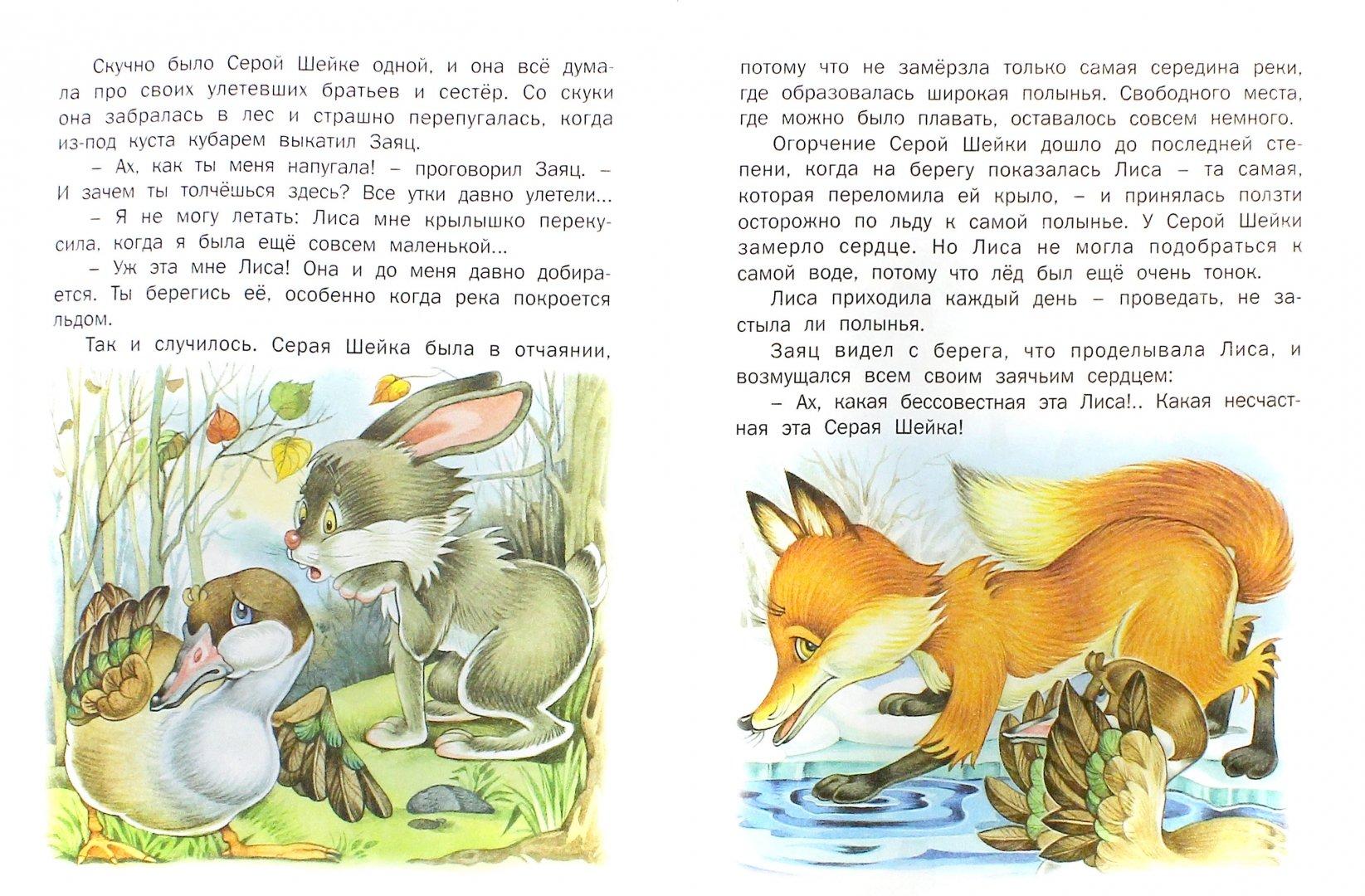 высыпьте сказка серая шейка распечатать с картинками любят зайцев