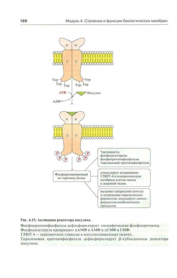 Иллюстрация 1 из 20 для Биологическая химия с упражнениями и задачами. Учебник (+CD) - Северин, Авдеева, Губарева, Алейникова, Андрианова | Лабиринт - книги. Источник: Лабиринт