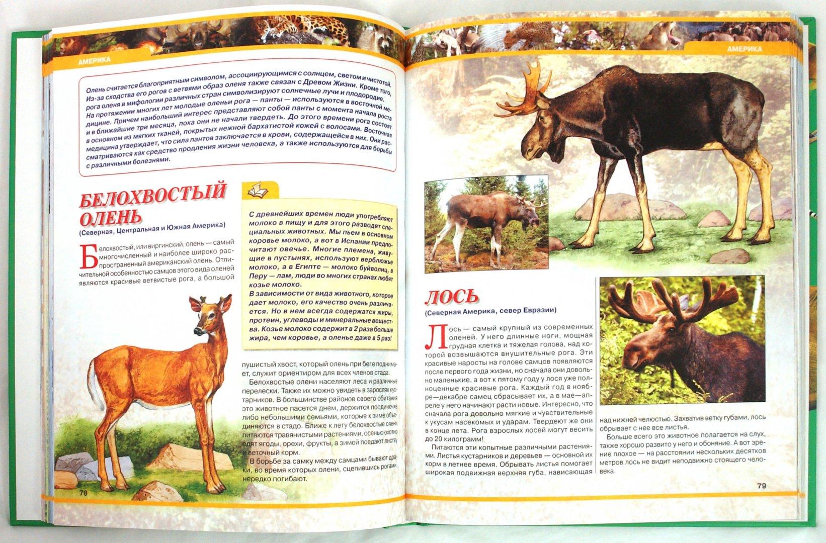 Иллюстрация 1 из 9 для Большая энциклопедия животных   Лабиринт - книги. Источник: Лабиринт