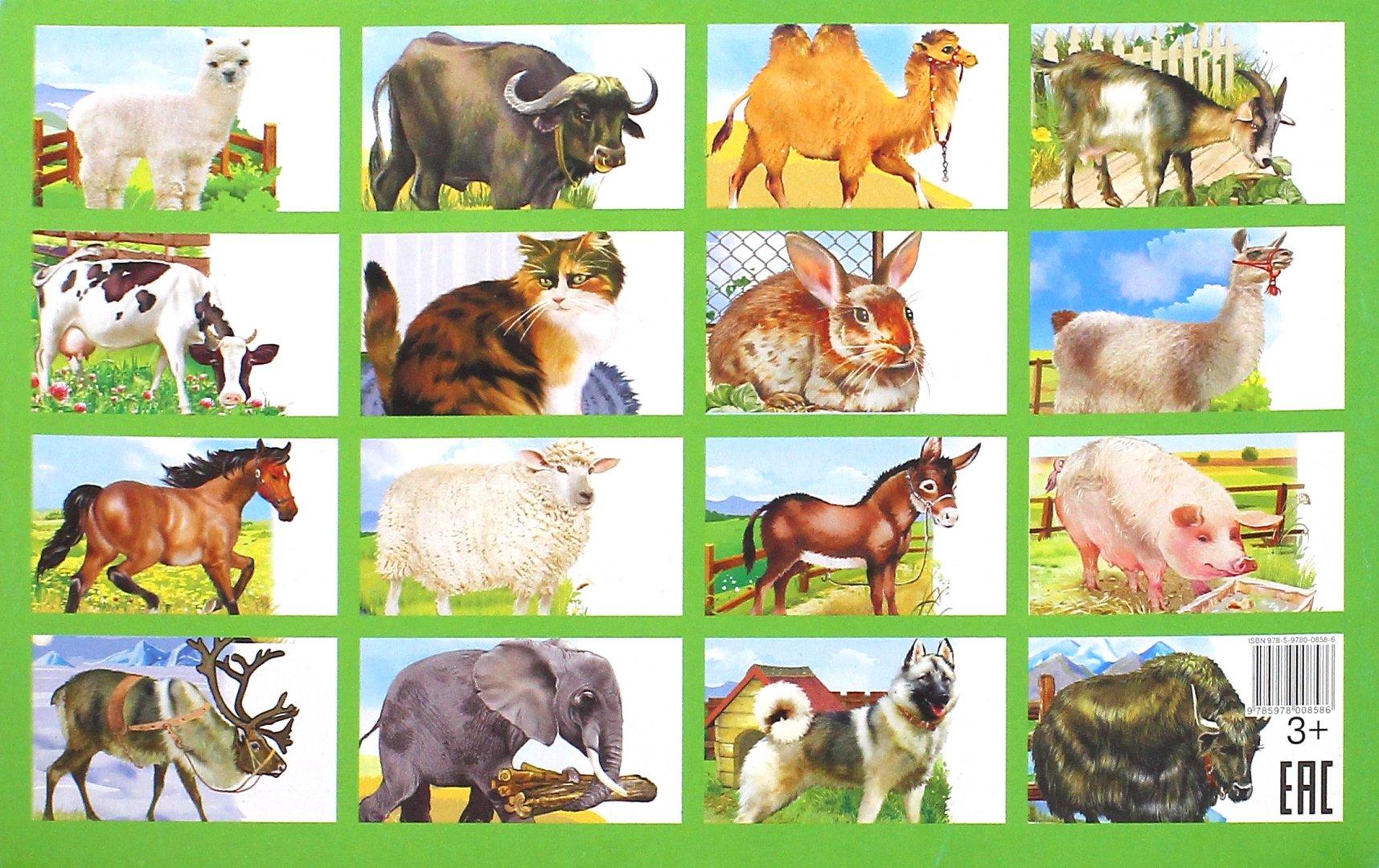 некоторых дикие и домашние животные картинки к занятию другой стороне центрального