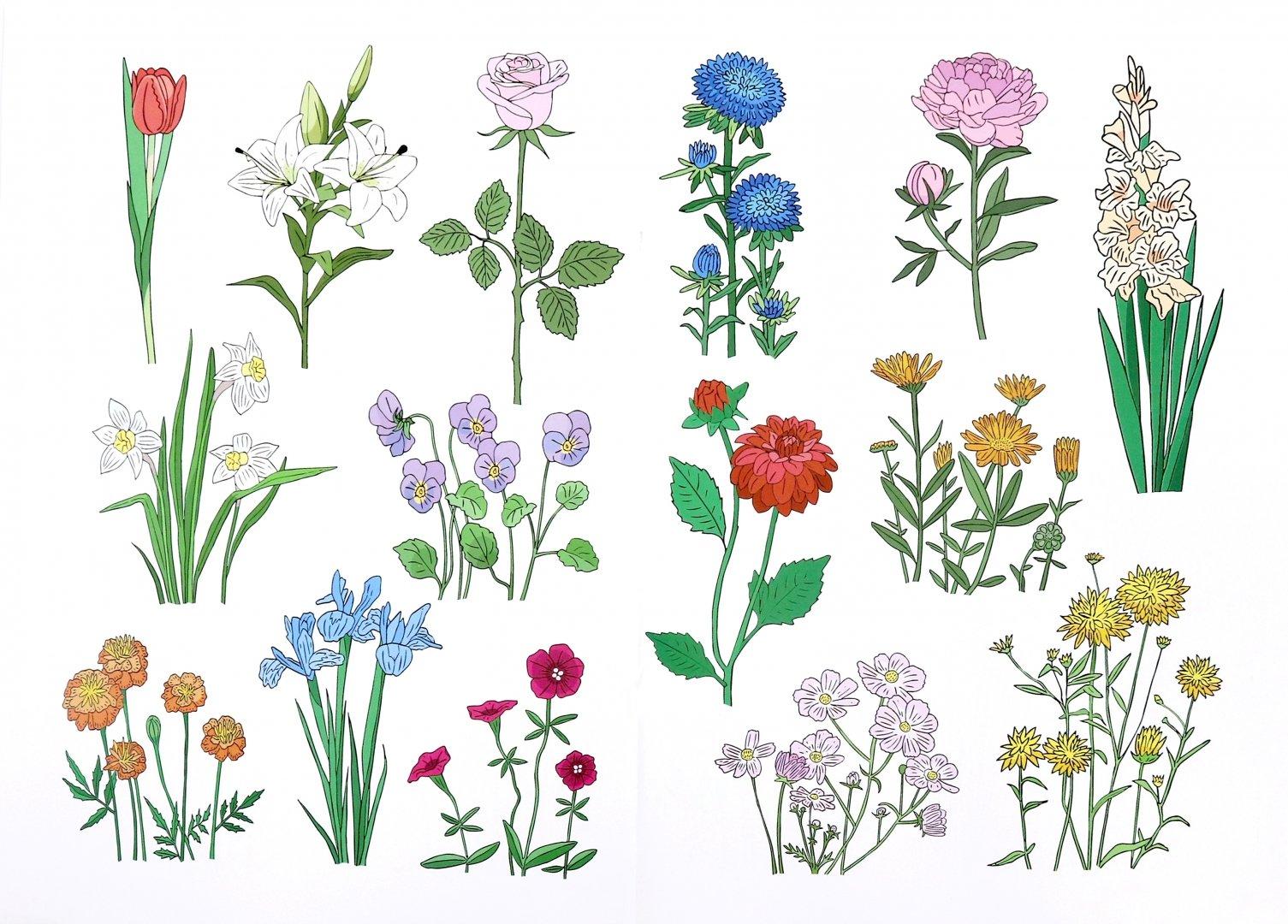 Рисунки цветов с названиями