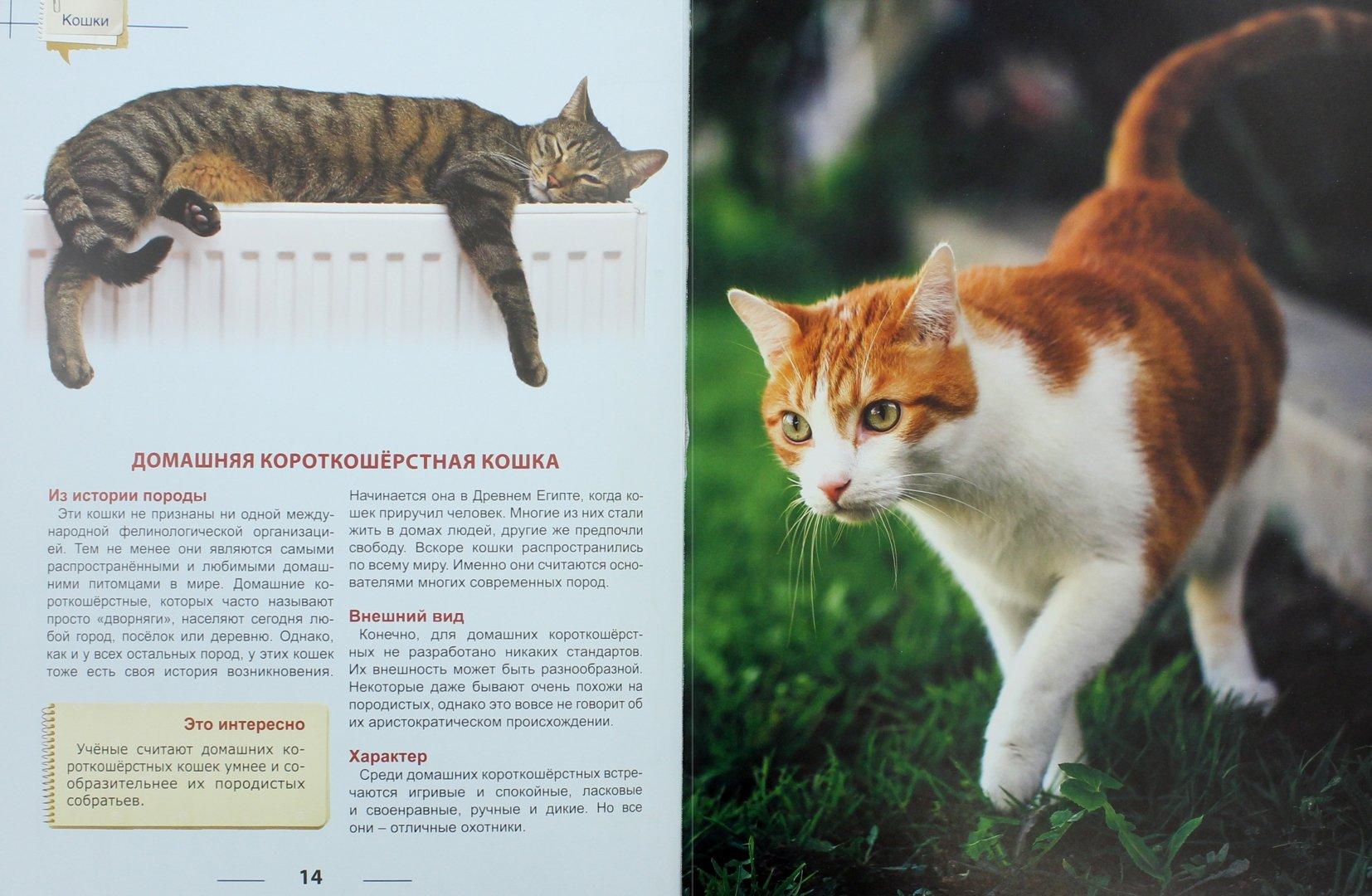 итоге картинки кошек с рассказами что