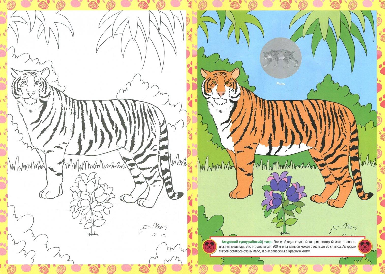 раскрасить картинку животного из красной книги задняя стенка такого