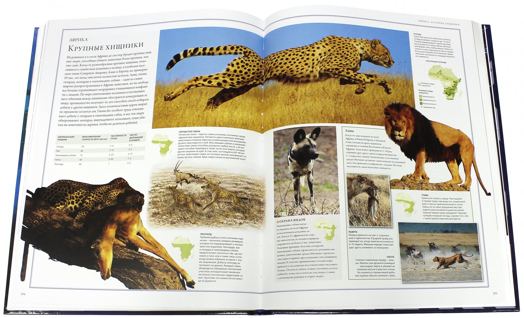 Иллюстрация 3 из 84 для Животный мир. Иллюстрированный атлас - Бамбарадения, Вудрафф, Гинзберг | Лабиринт - книги. Источник: Лабиринт